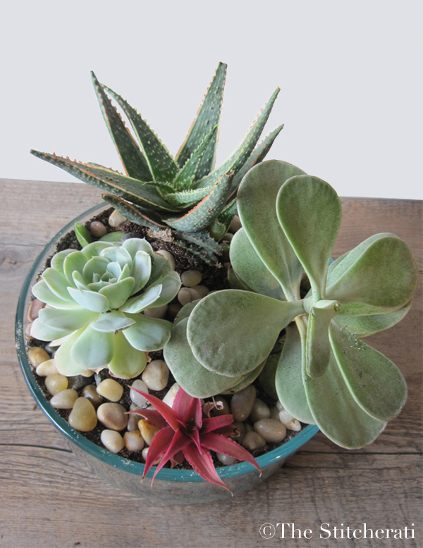Indoor Succulent Planter